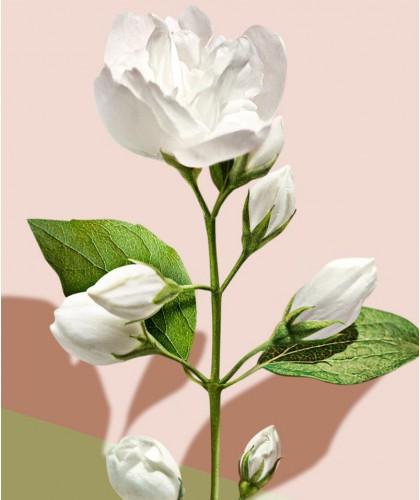 MADARA Gel Douche bio Infusion blanc hydratant jasmin Blanc plantes fleurs peau sensible floral cosmétique bio