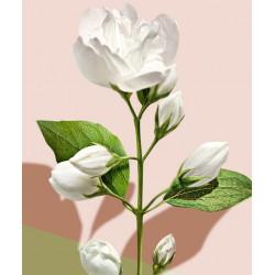 MADARA cosmétique bio Gel Douche végétal hydratant jasmin Blanc plantes fleurs peau sensible floral