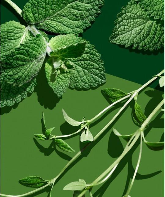 Madara cosmétique bio Gel Douche hydratant Vert green plantes naturel végétal frais beauté peau sensible prêle thym mélisse