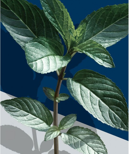 MADARA Mint & Absinthe Body Wash organic