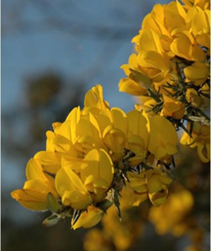 Mousse Nettoyante Visage bio Nominoë cosmétique naturelle de la Bretagne