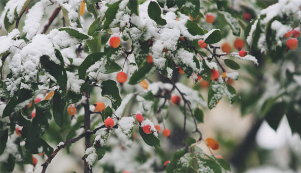 Beauté bio: soin grand froid hiver peau Madara cosmétique