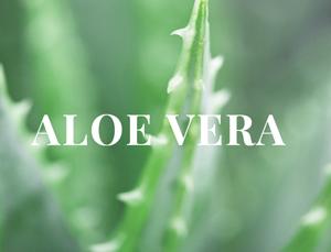 Aloe Vera bio Beauté Green bio cosmétiques naturels l'Officina Paris e-shop Lily Lolo Manucurist Madara Unique haircare